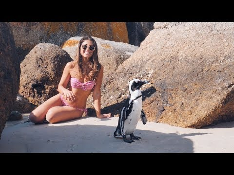 Xxx Mp4 Meeting The Penguins In Africa Mimi Ikonn Vlog 3gp Sex