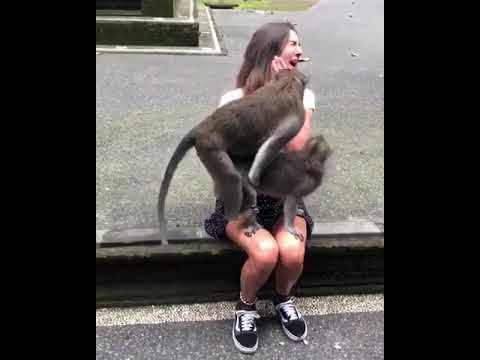Sex monky with girl