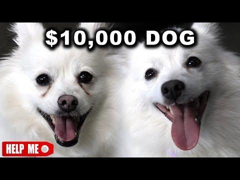 10 000 DOG VS. 1 DOG