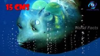 Cheb mami الشاب مامي   Douha 3liya   MP3 Écouter et Télécharger GRATUITEMENT en format MP3