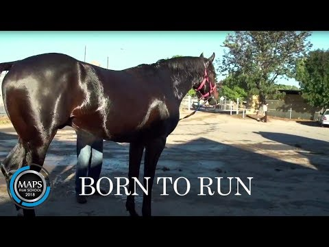A Horse Called Bear Movie Trailer June A Horse For Danny Movie Trailer