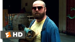 The Hangover Part II (2011) - Phil Gets Shot Scene (4/6) | Movieclips