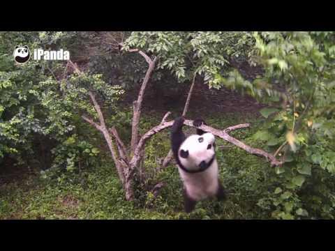 Xxx Mp4 Tarzan The Ape Panda 3gp Sex
