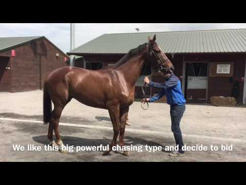 Goffs store sale 2016 - Philip Kirby Racing new Partnership horse search