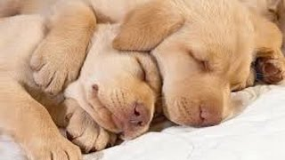 PET THERAPY ♣ Sleep Music for Dogs and Cats - Anxiety Problems, Sleep Disorders - 2 HOURS