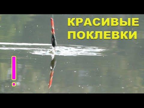 ловля рыбы на поплавочную удочку видео на реке