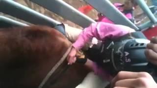 Girl Bull riding