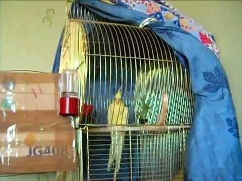 Накидка для клетки попугая 183