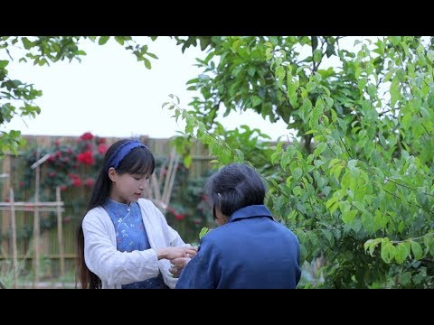 (青梅)The routine thing you shall never miss every summer to eat green plums Liziqi Channel