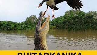 Bhitarkanika - The Amazon of India
