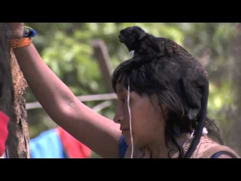 Breastfeeding Monkeys Human Planet Jungles