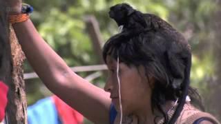 Breastfeeding Monkeys: Human Planet - Jungles