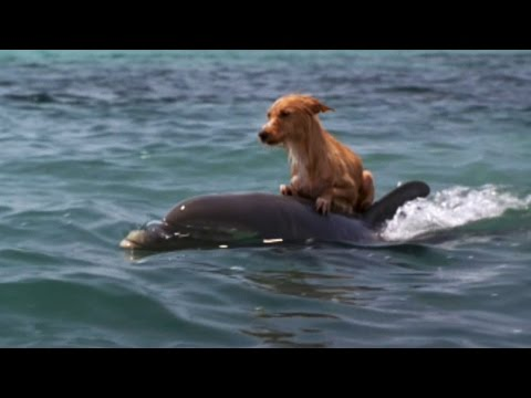 Xxx Mp4 DOLPHIN DOG SPECIAL FRIENDSHIP Vangelis Song Of The Seas 3gp Sex