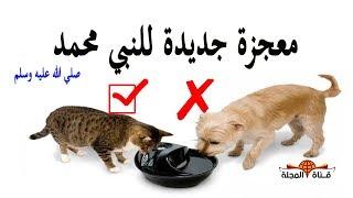 معجزة أذلهت العالم ...لماذا كان النبي يتوضأ من مكان شرب القطط واعتبرة طاهرا بينما الكلاب نجسة ؟؟