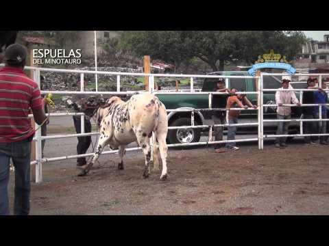 Xxx Mp4 CALA De Toros De Rancho La Misión En Juliantla Guerrero 29 Mayo 2013 3gp Sex