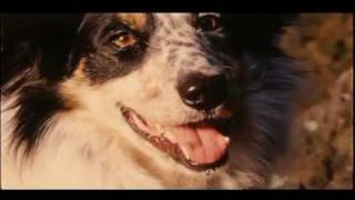 Pedigree - We're For Dogs - TV commercial