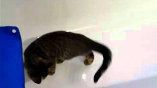 Funny Bengal Kitten playing ball 2