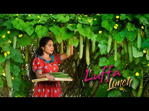 Luffa Ridge gourd vine to Lunch table & only chance to see the Cuttlefish Flower Traditional Me