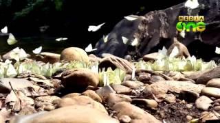 Morning Walk to Aralam Wild Life Sanctuary 25 09 15