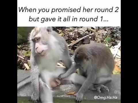 Xxx Mp4 Monkey Having Sex Funny 3gp Sex