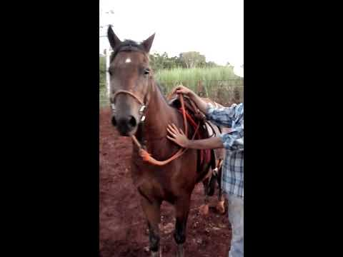 Jorge Moises Domando Cavalo De Rodeio