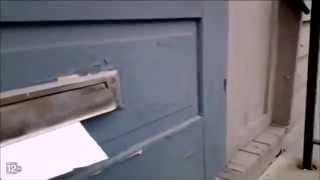 Ferocious Cat Battles the Mailman Through the Mail Slot
