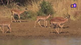 South Africa - Waterhole at Pilanesberg National Park