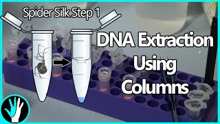 DNA Extraction Using Columns - Spider Silk Step 1