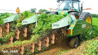 Peanut Harvesting Machine - How to Harvest Peanut in Farm modern agriculture 2018