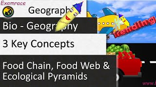 Food Chain, Food Web and Ecological Pyramids - 3 Key Concepts in 1 Lecture