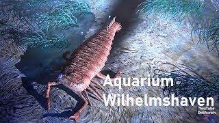Rundgang Aquarium Wilhelmshaven Urzeitmeer Museum Tropen Korallenriff Seeaquarium Unterwasserwelt