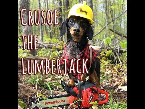 Xxx Mp4 Crusoe The Lumberjack Wiener Dog 3gp Sex