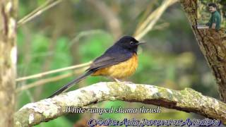 41 Beautiful Birds with Name (Bengali new year 1422 greetings)