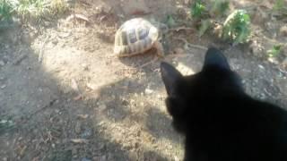 Kedi kaplumbağayı  görürünce ne mi yaptı ?