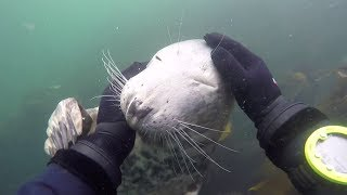 Friendly seal gets playful with diver