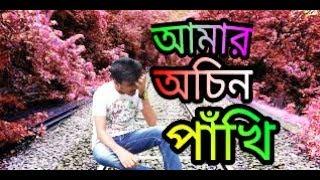 Achin Pakhi - Tausif | action bangla tv Version | 2017|