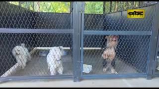Un hotel para perros en Areguá