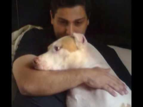Homenagem ao meu cachorro anjo de quatro patas Jason pit bull saudades