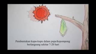 Video Pembelajaran Stop Motion IPA Metamorfosis
