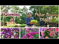 Download Lagu MP3 Learn How to make Seedlings of Aster Flower Plant.