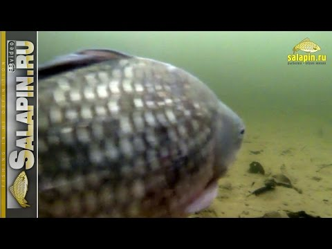 реакция рыбы на наживку