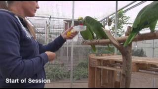 Parrot Training: Before and After