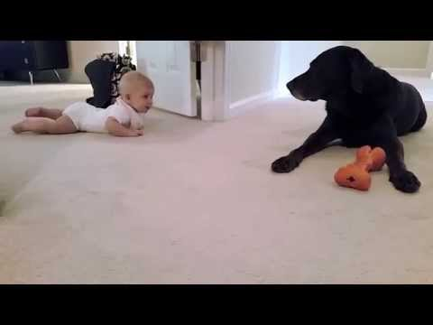 Xxx Mp4 Baby S First Crawl With Her Dog What A Cute Ending 3gp Sex