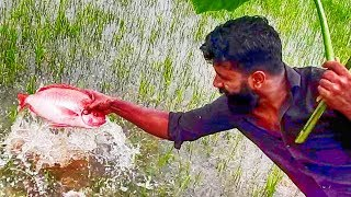 KFC Grilled Fish / Making / ഒന്നര കിലോ മീൻ ചുട്ടെടുത്തത് / Village food factory