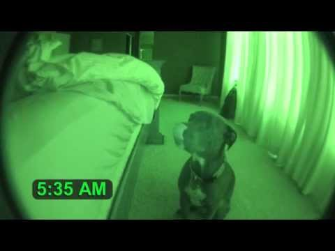 Pitbull Alarm Clock with Snooze Feature cute dog
