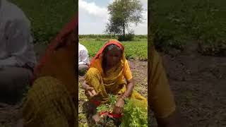 Funny maharastrian old lady interview!!whatsapp funny video!!most funny video ever!!