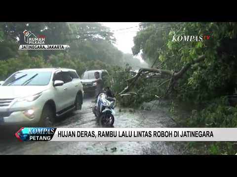 Download Hujan dan Angin Kencang Sebabkan Pohon Tumbang free