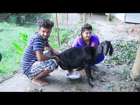 Xxx Mp4 Goat S Milk Young Village Girl New Stlye Goat S Milk Out Dorojati Kholo 3gp Sex