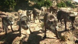 Jungle Jungle Baat Chali Hai Full Title VIDEO Song