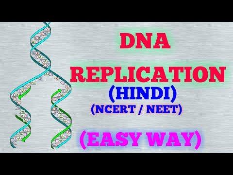 Xxx Mp4 DNA REPLICATION HINDI EASY WAY NCERT 3gp Sex
